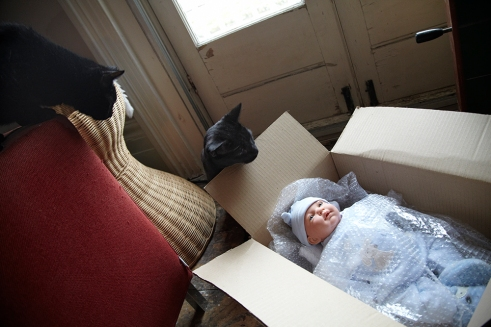 pictures I'll never take -cats and baby