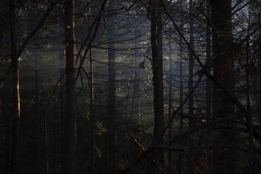 1862woodsweb